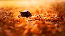 Macro Field Wallpapers; Macro Wallpapers ...