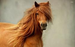 "Related Post ""19832 majestic horse 1920×1200 animal wallpaper"""