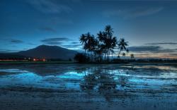 Malaysia palms sunset dzheray