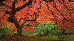 check out them maples.
