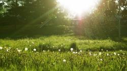 Dandelion meadow Wallpaper in 1600x900 HD Resolutions