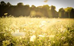 Beautiful Spring Meadow Wallpaper
