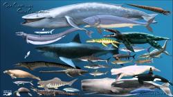 Sea Creatures Size Comparison 4