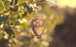 Metal Owl Bird Branch Leaves Macro Photo