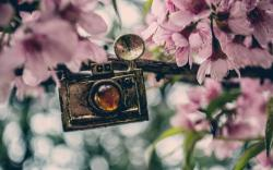Miscellaneous Pendant Camera Flowers Pink