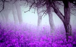 ... Misty Wallpaper ...