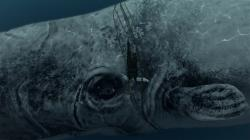 ... Animal Planet far filme sobre Moby Dick do ponto de vista da baleia ...