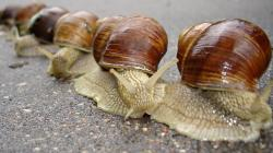 Mollusks · Mollusks · Mollusks · Mollusks