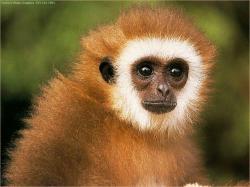 ... Image Monkey #06 Image