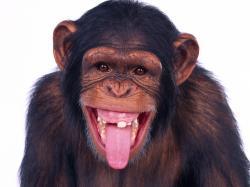 ... Monkey #04 Image ...
