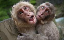 Pictures Of Monkeys