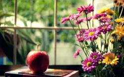 ... Red Flowers Pink Yellow. Flowers apple mood