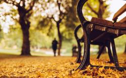 Related For Mood Bench Park Leaves Path Fall Autumn. Bench Trees Park Leaves Yellow Autumn Nature