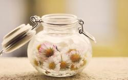 Mood Daisies Flowers Jar