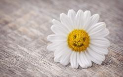Mood Flower Daisy Smile