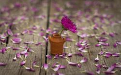 Mood Flower Pink Petals Vase