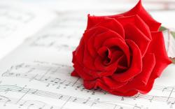 Mood Flower Rose Red Music