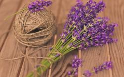 Mood Flowers Lavender Purple