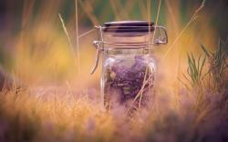 Mood Flowers Purple Lavender Jar Grass Nature Macro