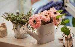 Mood Flowers Watering