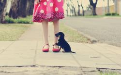 Mood Girl Pink Dress Polka Dots Puppy Photo HD Wallpaper