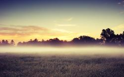 Morning Mist Wide Wallpaper