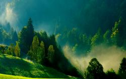 Morning Mist Wallpaper 16095
