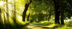 free wallpaper of natural scenery - forest in the morning,click to .