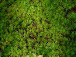 Moss Photos