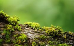 Bark With Moss