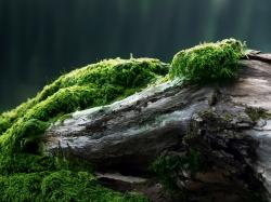 Moss Wallpapers 38580 1920x1080 px