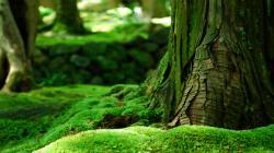 Woods Wood Bark Moss Herbs Summer Wallpaper