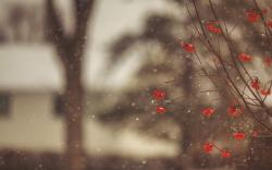 Mountain Ash Red Berries Branches Winter Snowflakes