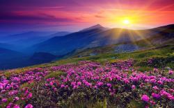 Mountains azalea sunset