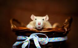 Mouse Basket Ribbon Bow HD Wallpaper