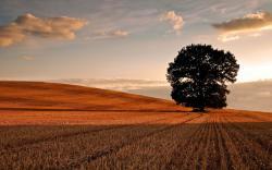 Mowed Field Sunrise
