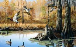 Duck Mural Wallpaper Murals