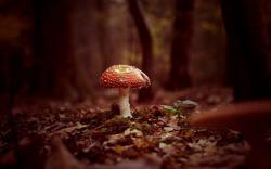 Forest Mushroom Autumn Nature HD Wallpaper