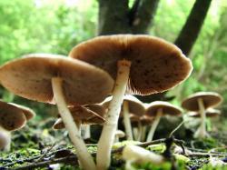 ... Image Mushrooms #06 Image