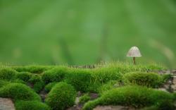 ... Mushroom Wallpaper · Mushroom Wallpaper