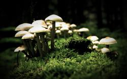 nature mushrooms wide hd wallpaper