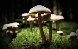 nature-mushroom-wallpapers-white ...