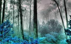 Foggy Mysterious Forest Wallpaper