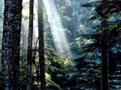Olympic National Forest Wallpapers