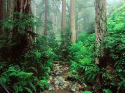 olympic national park HOH rainforest 6 amazing trees