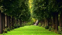 Superb Natural Green Park Free Wallpaper Image 16337 HD Wallpapers …