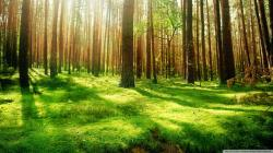Nature Pictures Forest Hd Widescreen 11 HD Wallpapers