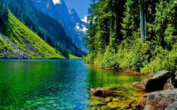 Green Nature Wallpaper 14