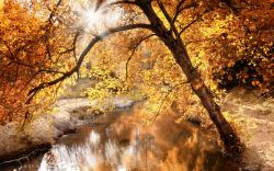 Nature Autumn