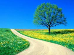Nature Background images9